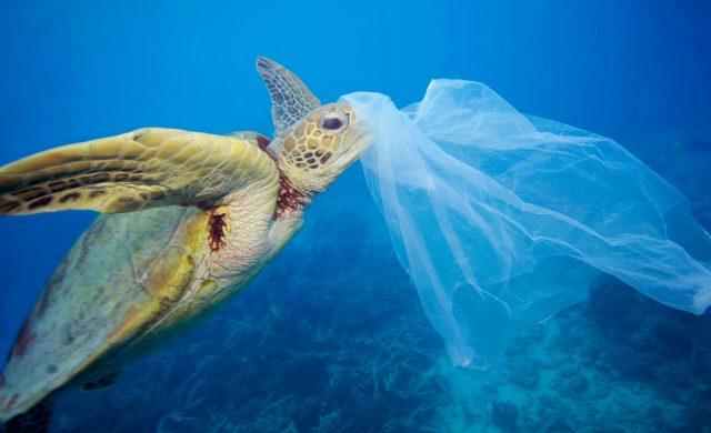 ビニール袋は英語で「Plastic bag」(なんとプラスチック製だった)